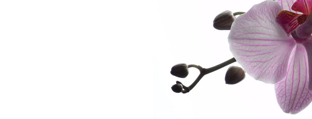 Storczyk